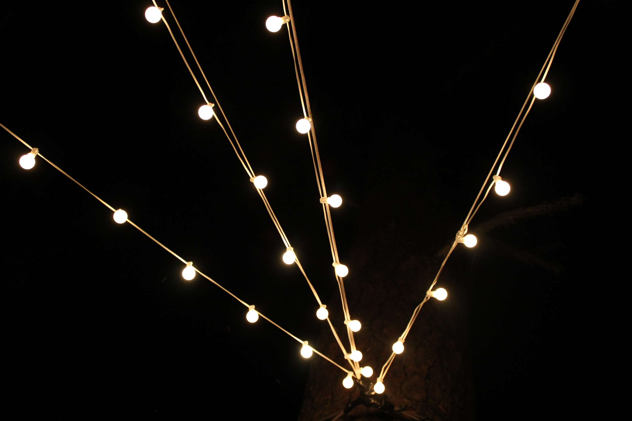 Lights.Ponderossa5.JPG