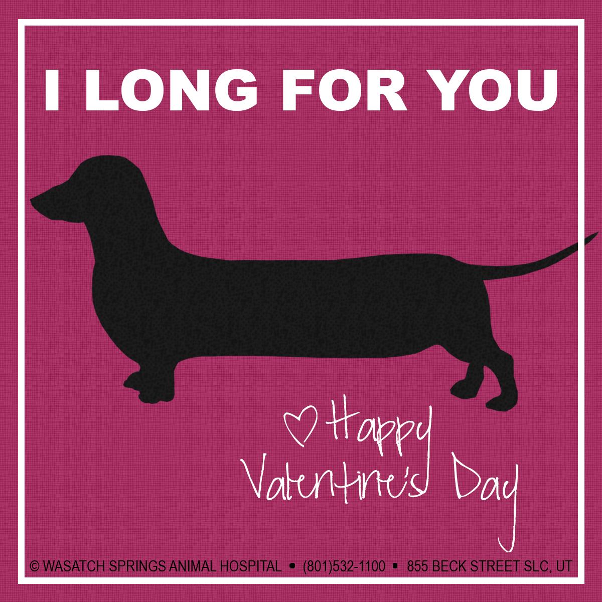 Valentines2015-WSAH-dog1.jpg