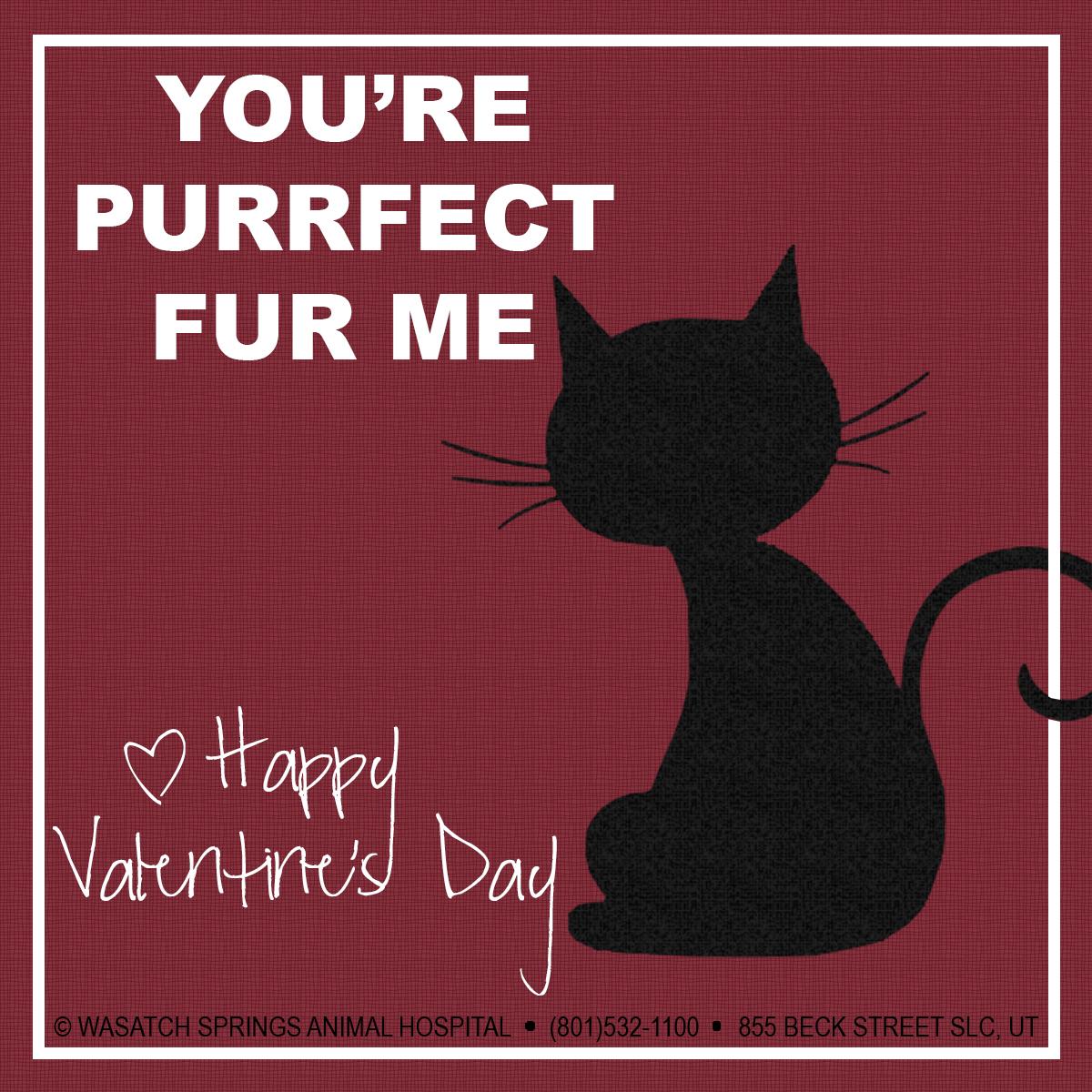 Valentines2015-WSAH-cat1.jpg