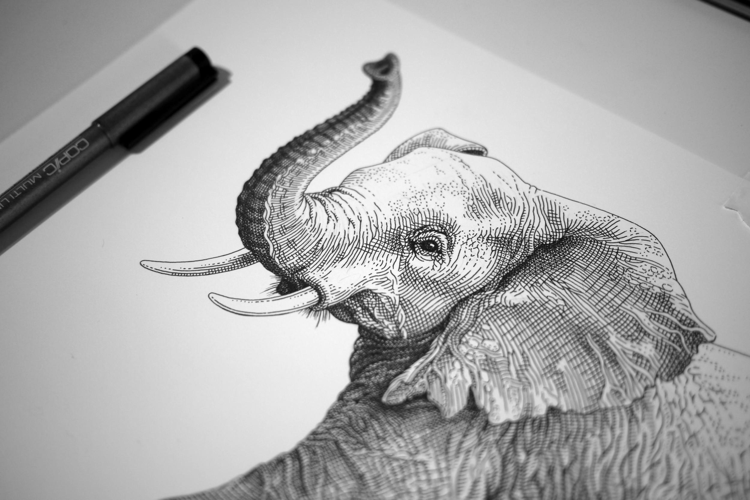 Elephant WIP3.jpg