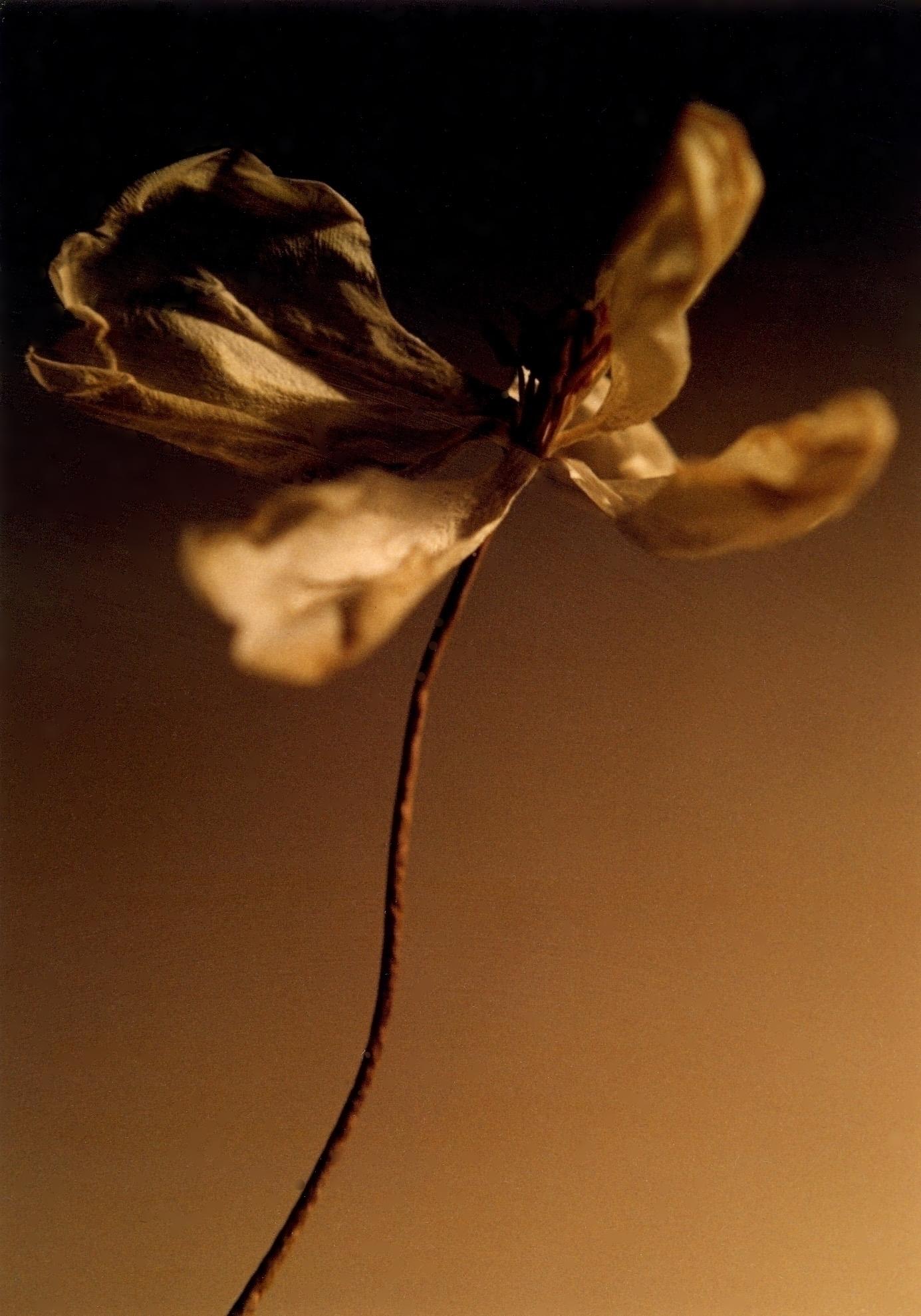 Martha flower.jpg