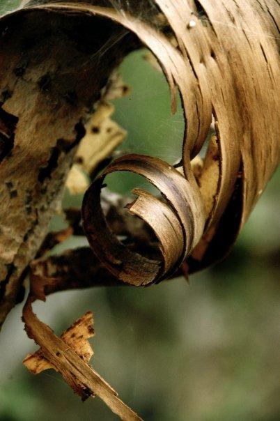 bark copy.jpg