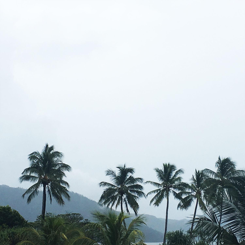 palmtrees