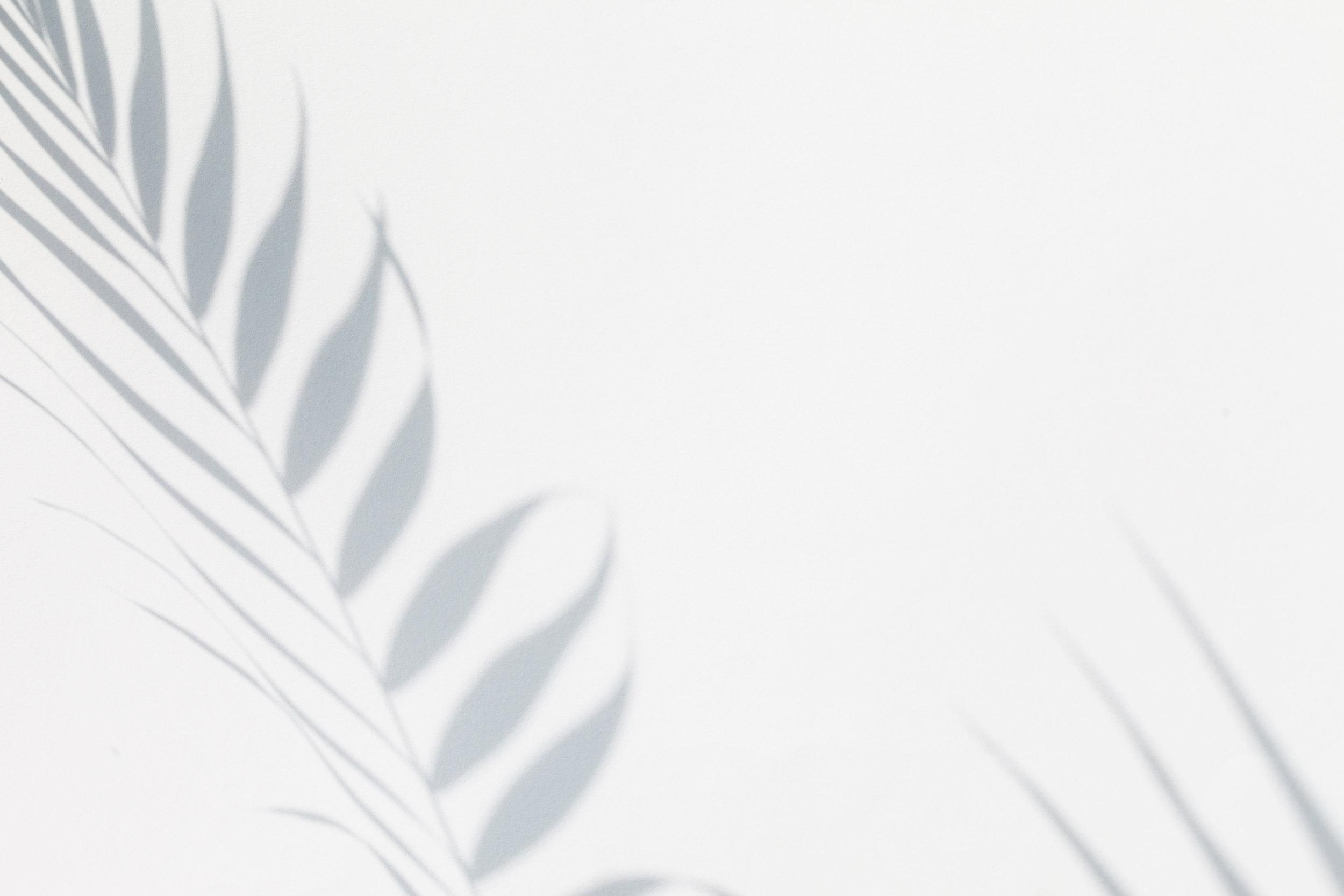 palmtreeshadow