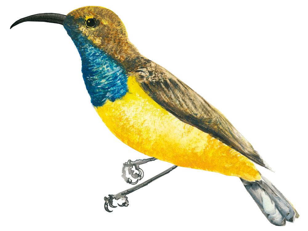 Sunbird-02.jpg