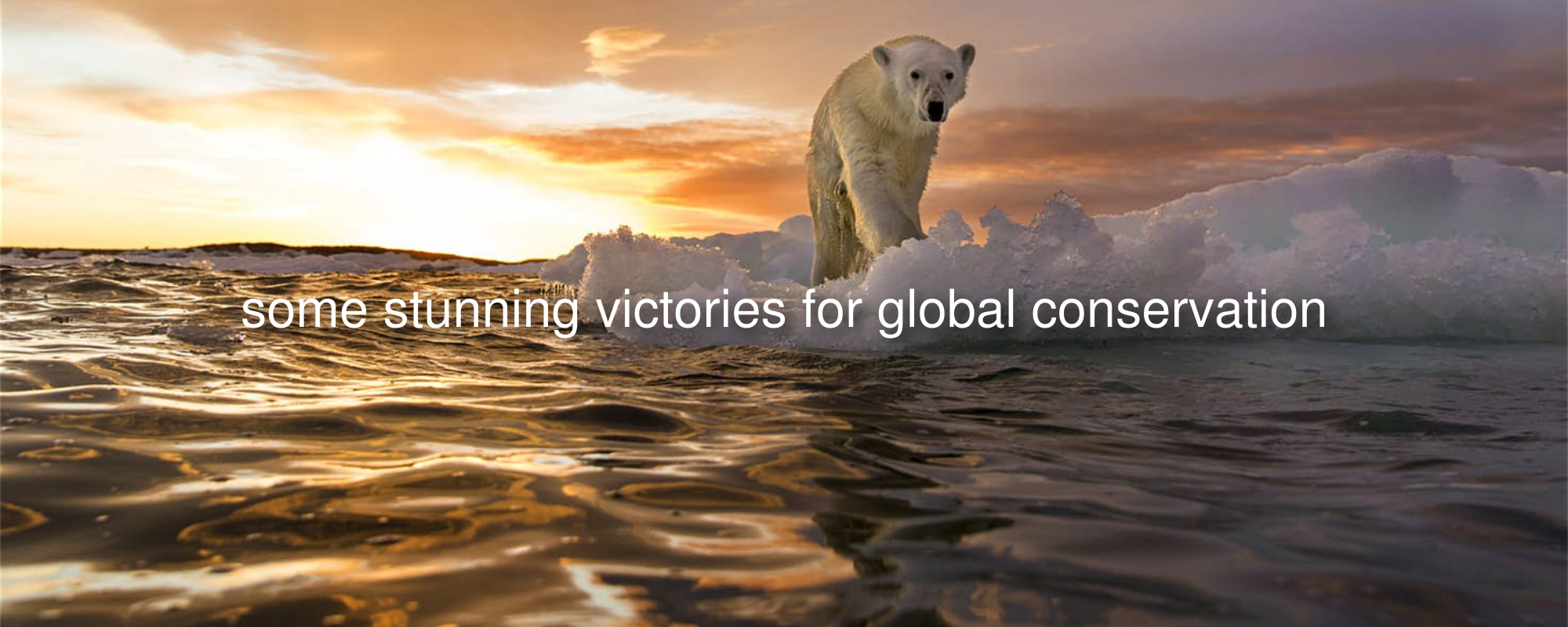 A polar bear stands on sea ice as the sun sets on Repulse Bay, Canada (Image credit: Paul Souders )