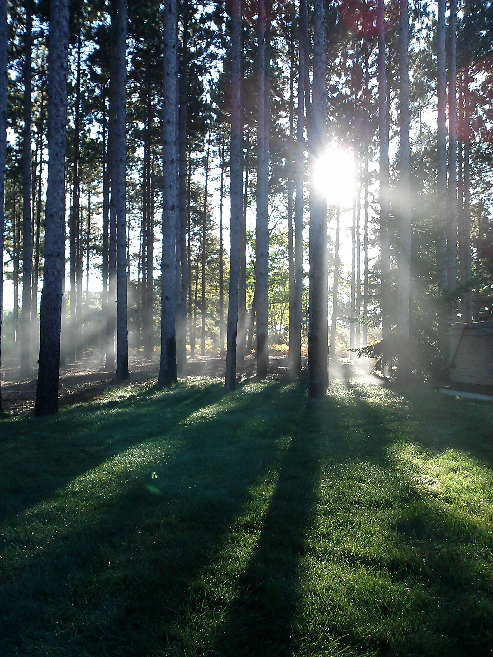 4.14 Fall Mist Trees Sun.jpg
