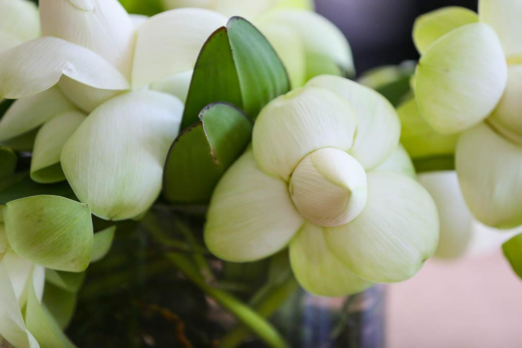 Fleur Dainty (3 of 7).jpg