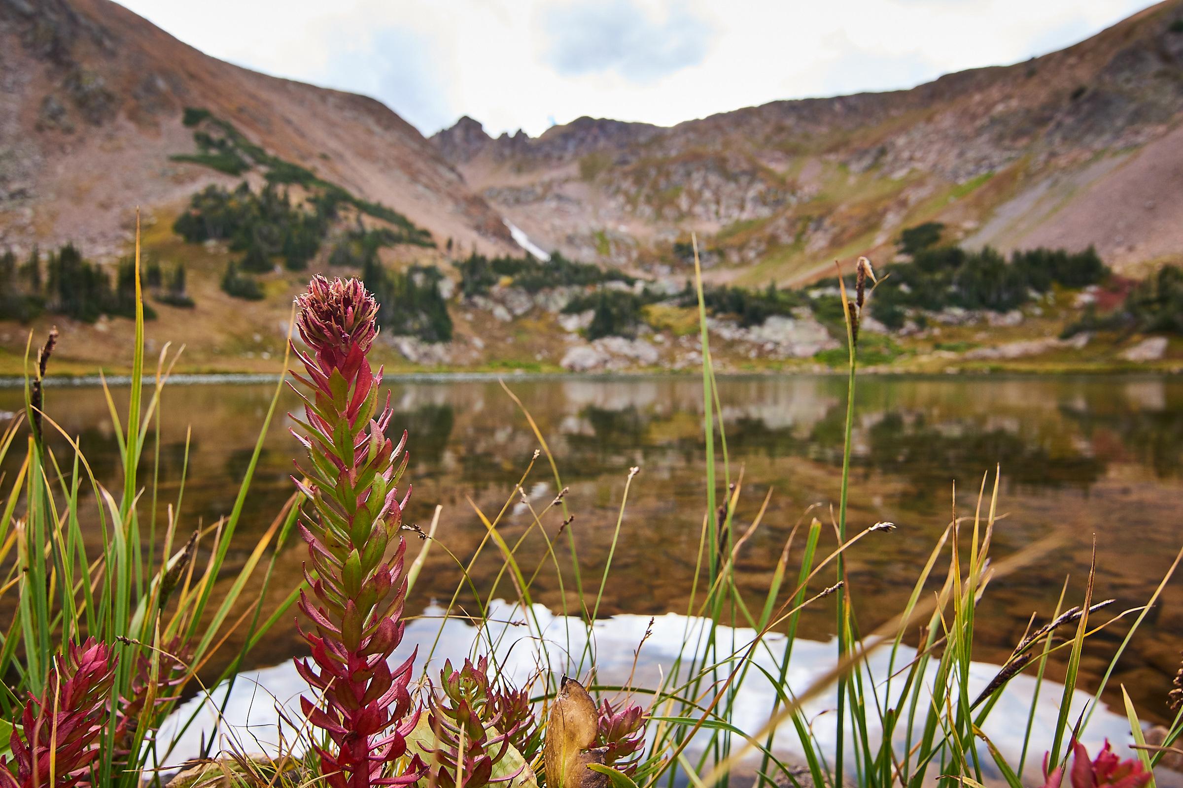 Flower @ Rogers Peak Lake
