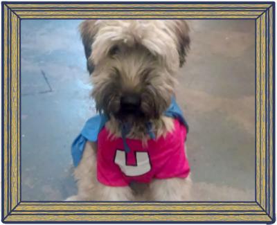 brooklyn-dog-walker.png