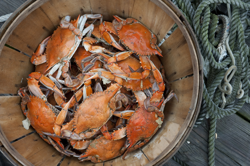 The photo is by Edwin Remsberg, and shows a bucket of blue crabs.