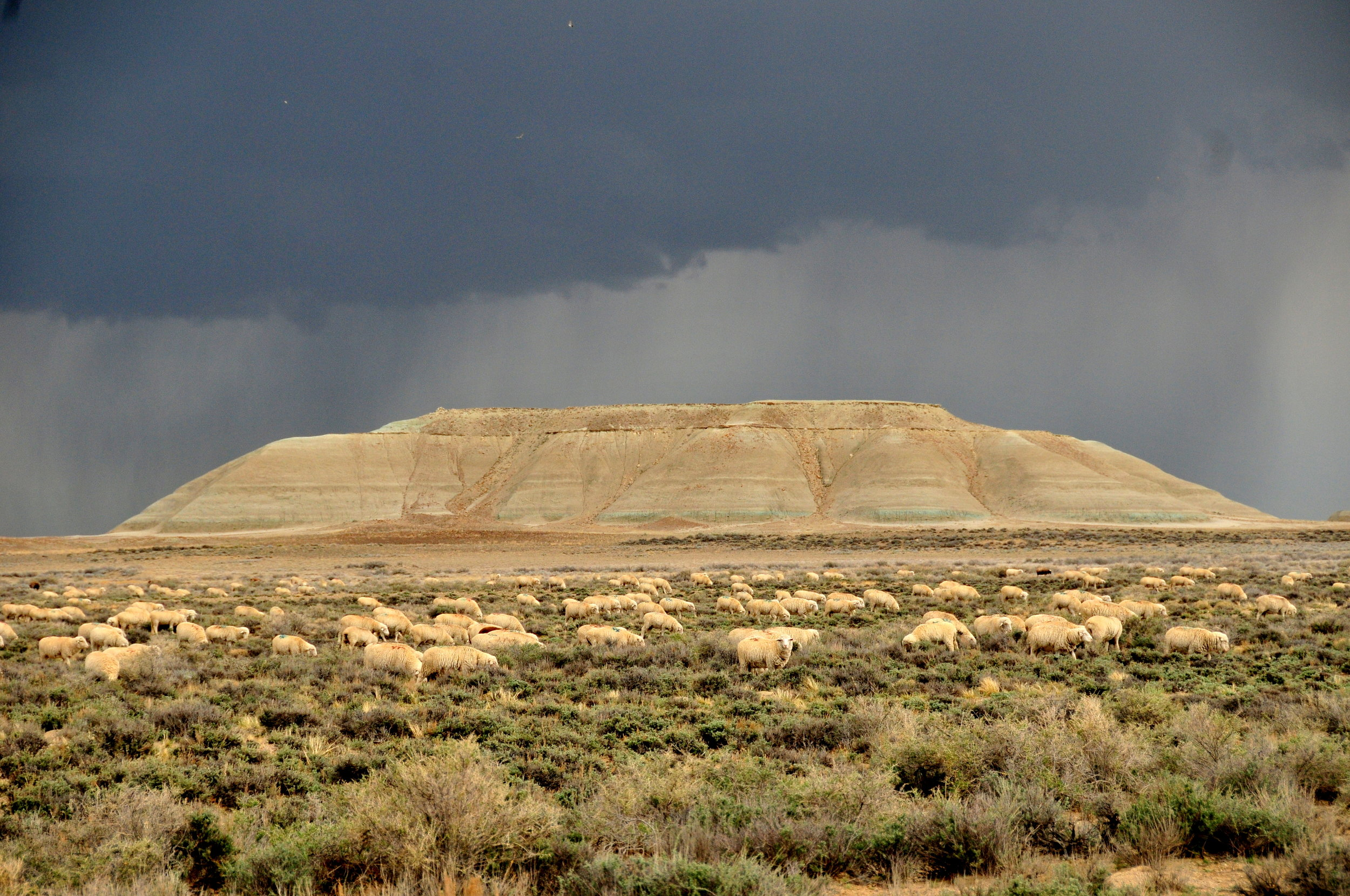 Photo by Tom Koerner/USFWS. Photo shows rangeland in Wyoming with sheep and a mountain in the background.