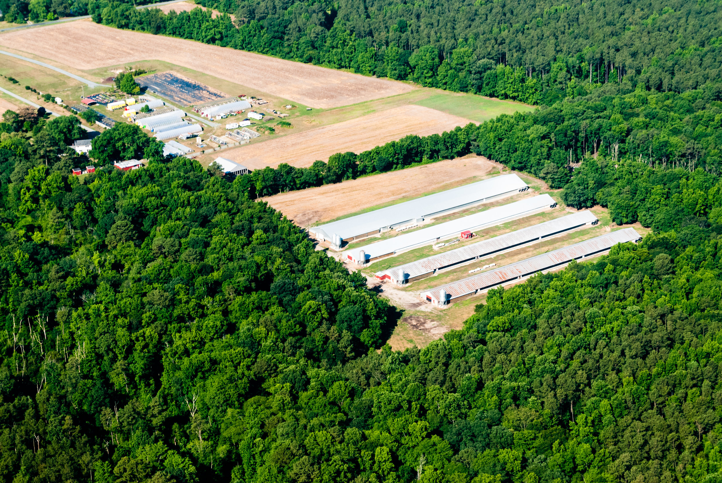 Poultry barns and a small farm are surrounded by forested land in Maryland. Image by Matt Rath/Chesapeake Bay Program.