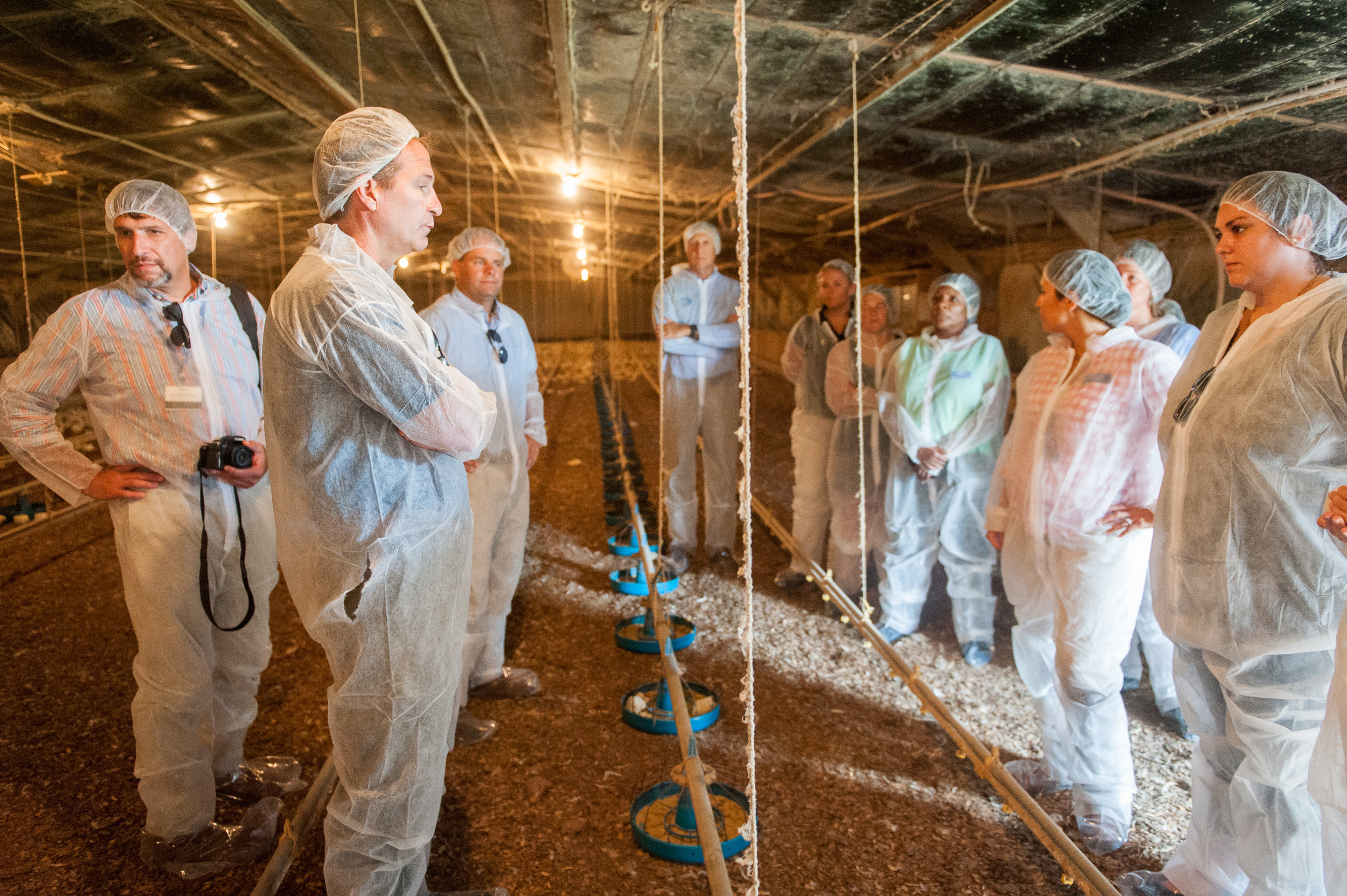 Inside poultry house in Maryland. Image by Edwin Remsberg.