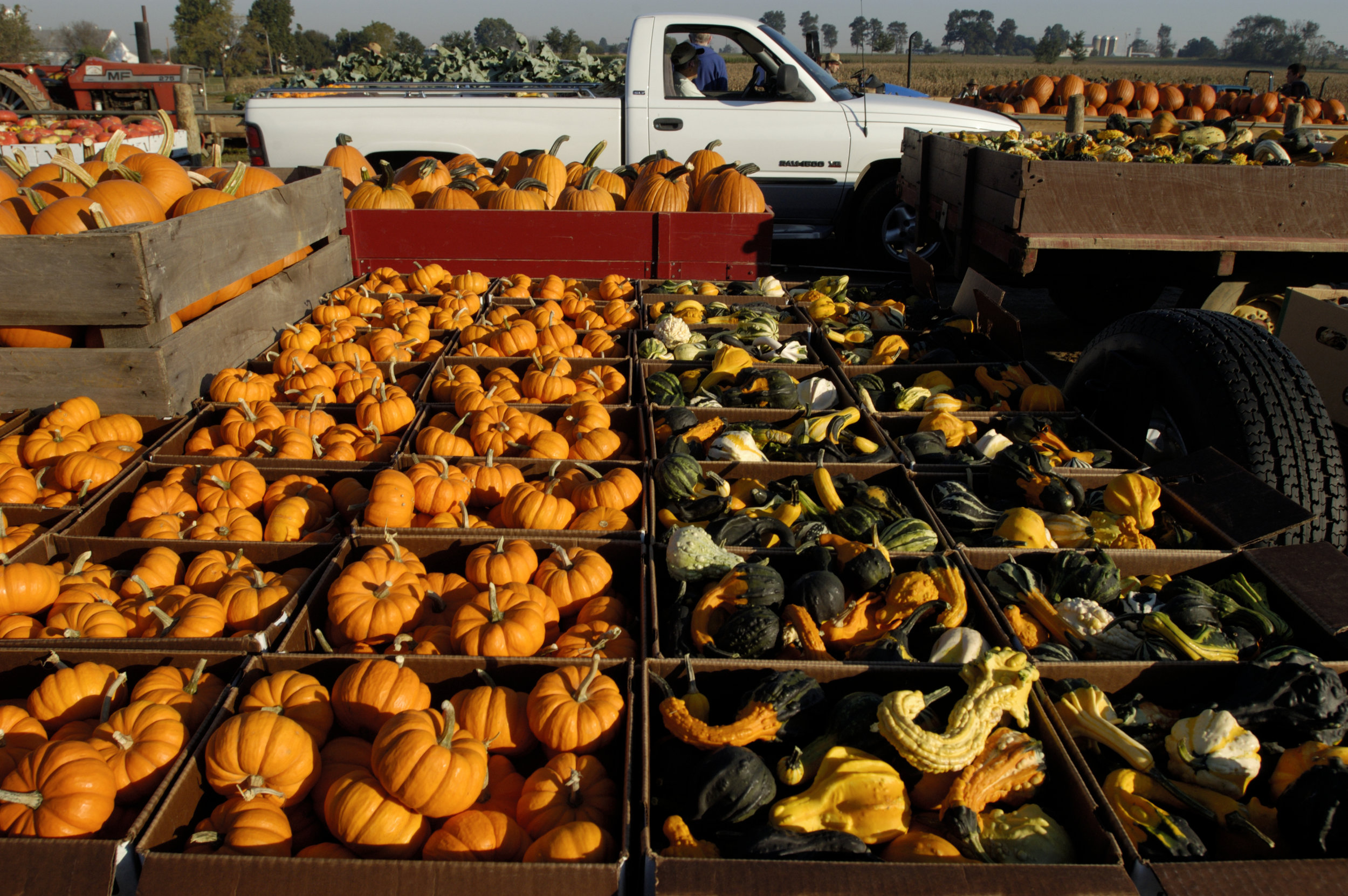 Photo by Edwin Remsberg. The image has rows of boxes filled with pumpkins and squash at a market.