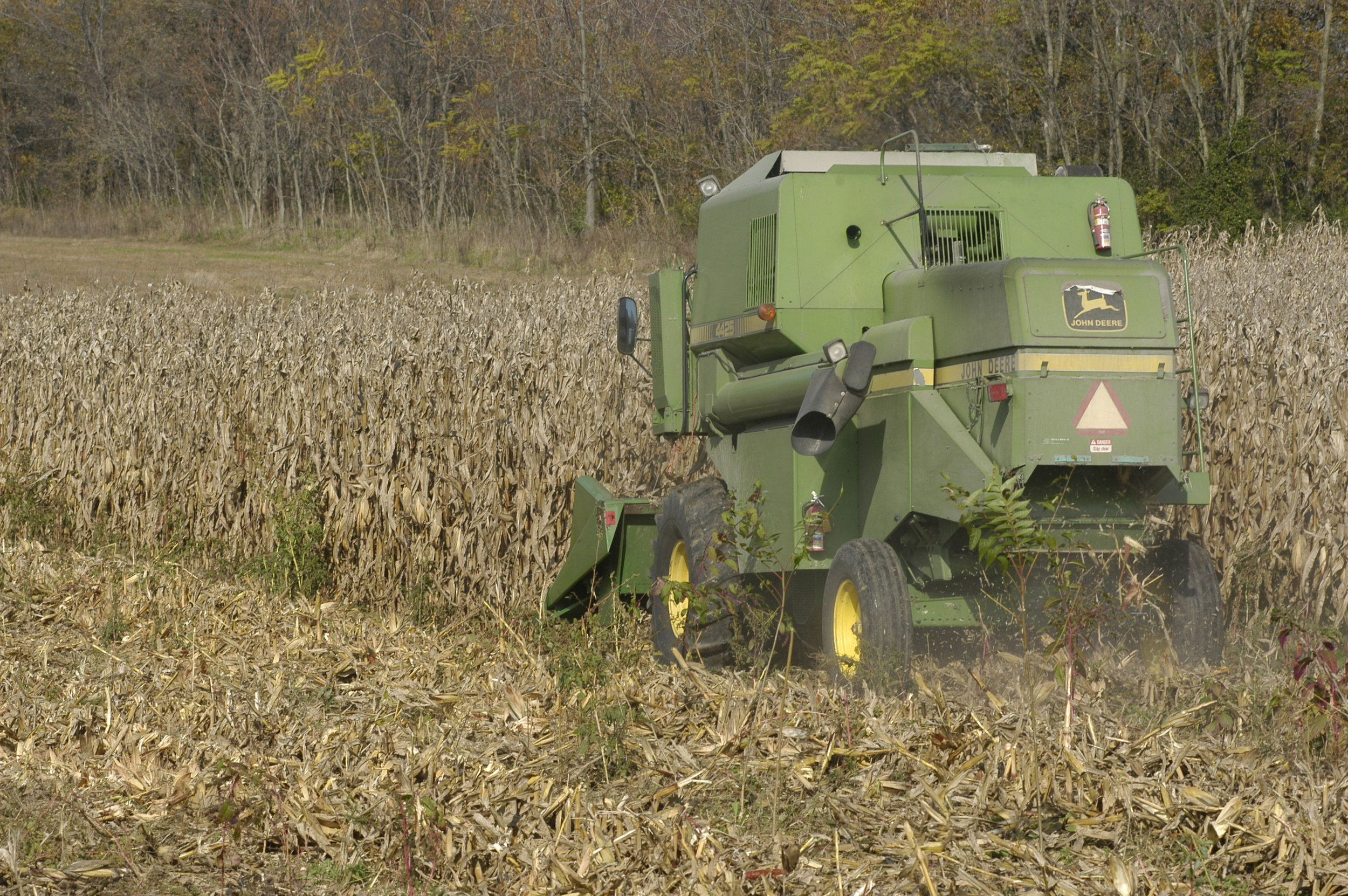 Corn harvest with combine cutting corn in the field.  Image by Edwin Remsberg