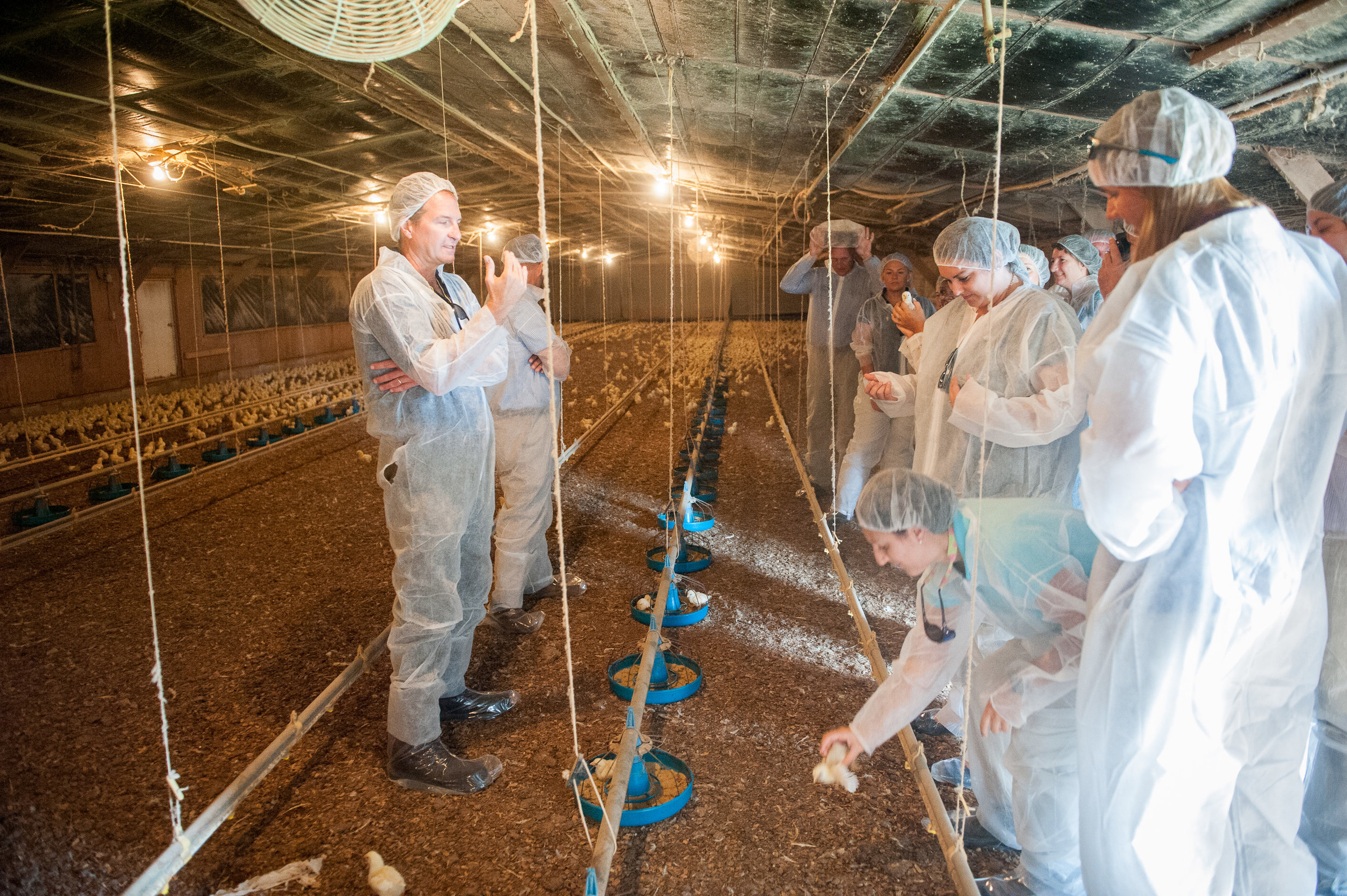 Individuals in biosecurity clothing in a poultry house in Maryland.  Image is by Edwin Remsberg