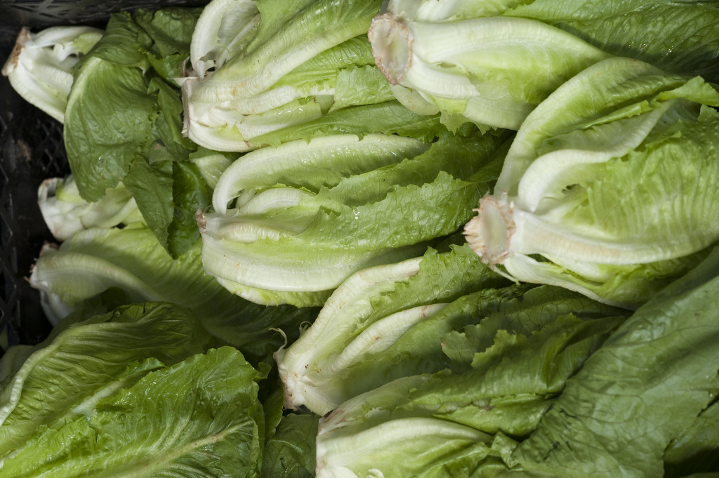 The image shows a pile of fresh lettuce in a crate. Photo by Edwin Remsberg.