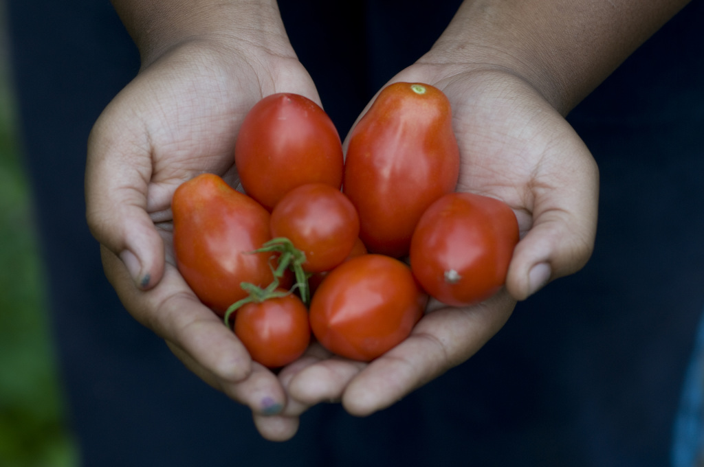 The photo shows two hands holding tomatoes. Image taken by Edwin Remsberg.