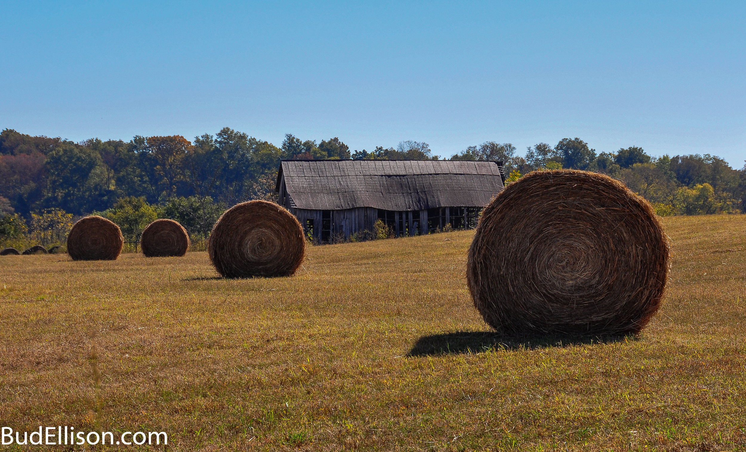 Round hay bales in field in Alabama with old barn in background.  Image is from flickr by Bud Ellison.