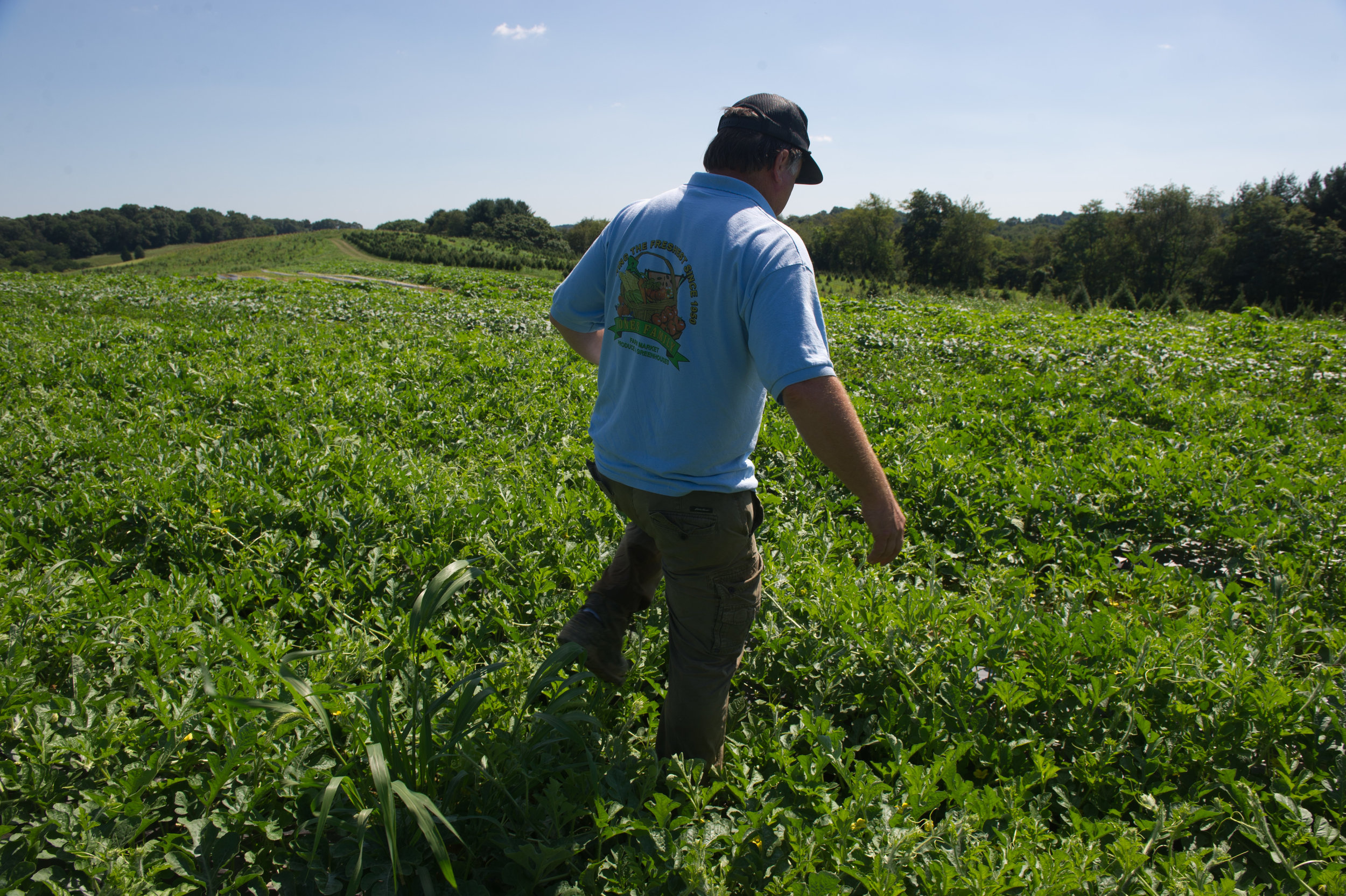 Image by Edwin Remsberg. Image shows individual walking in a field with growing crops.