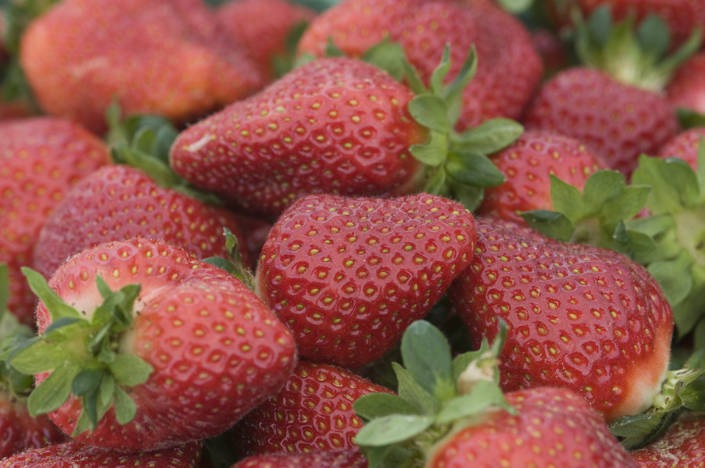 Strawberries are piled together in Charles County, Maryland. Image taken by Edwin Remsberg.