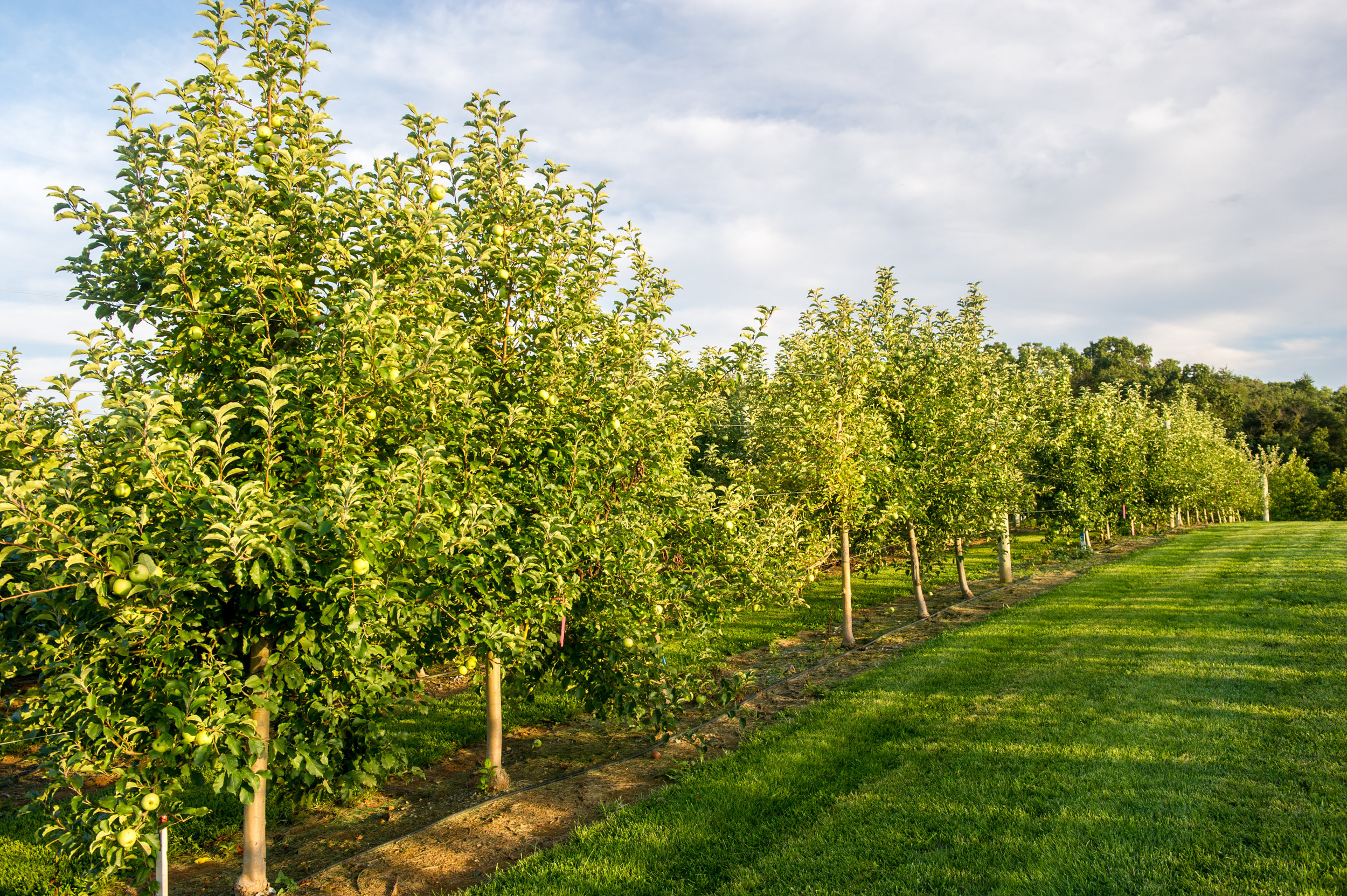 The image shows an orchard. Photo by Edwin Remsberg.