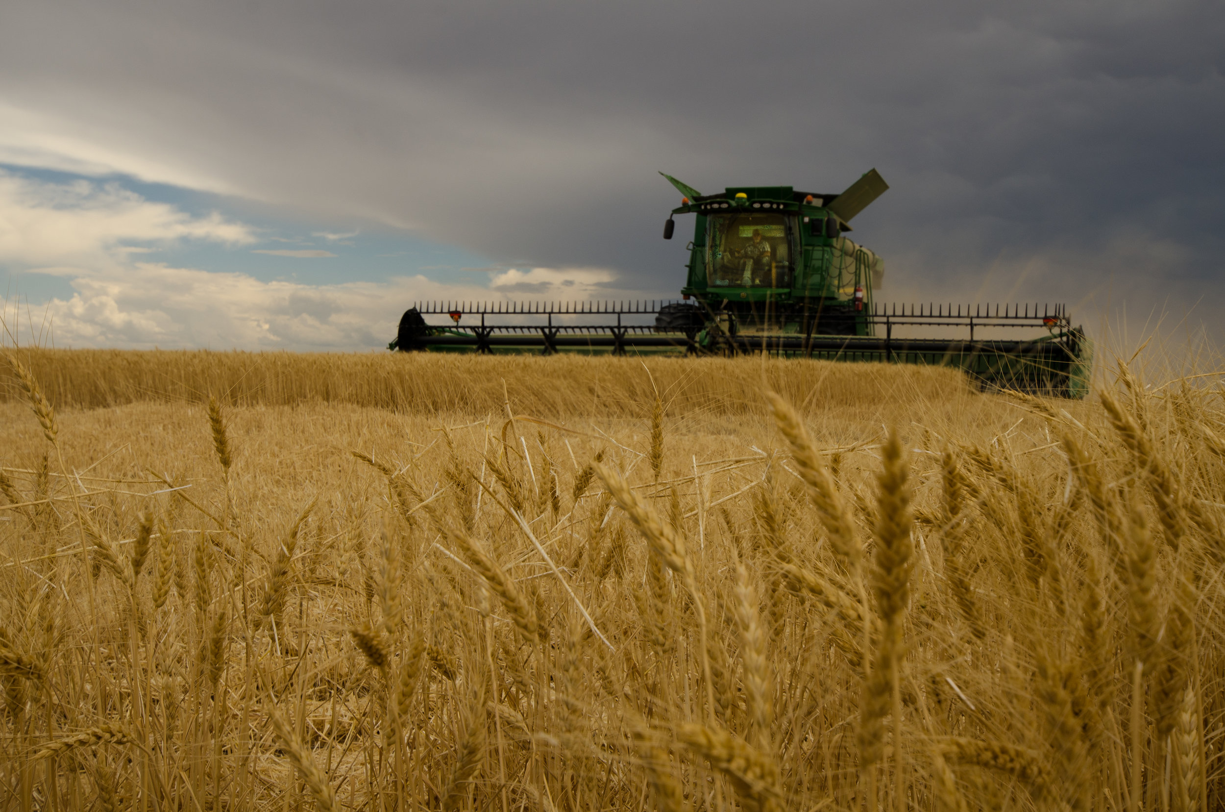 Image by Shannon Dizmang. Image of combine harvesting wheat in Colorado.