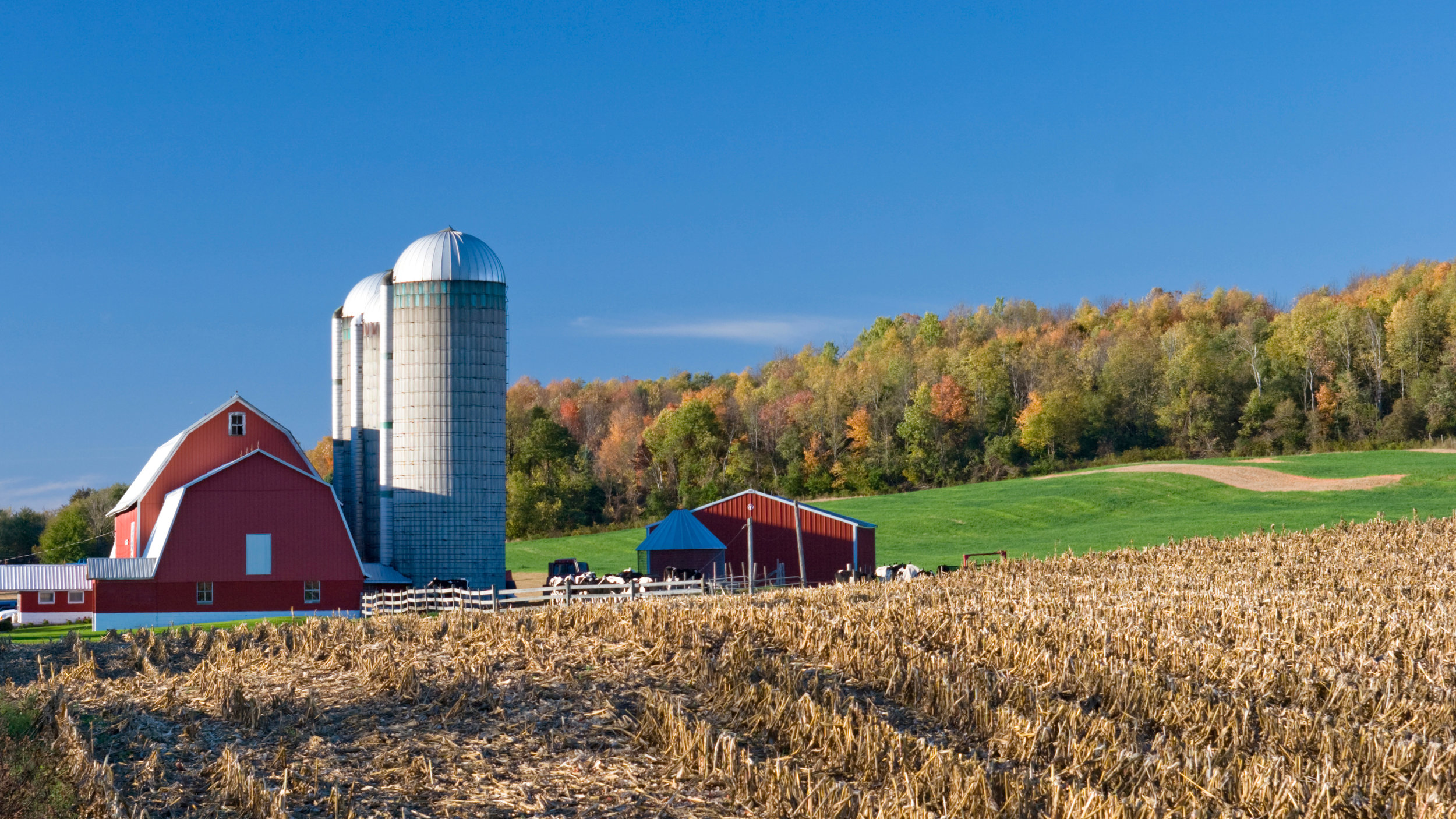 Image of dairy farm with red barn. Image by USDA
