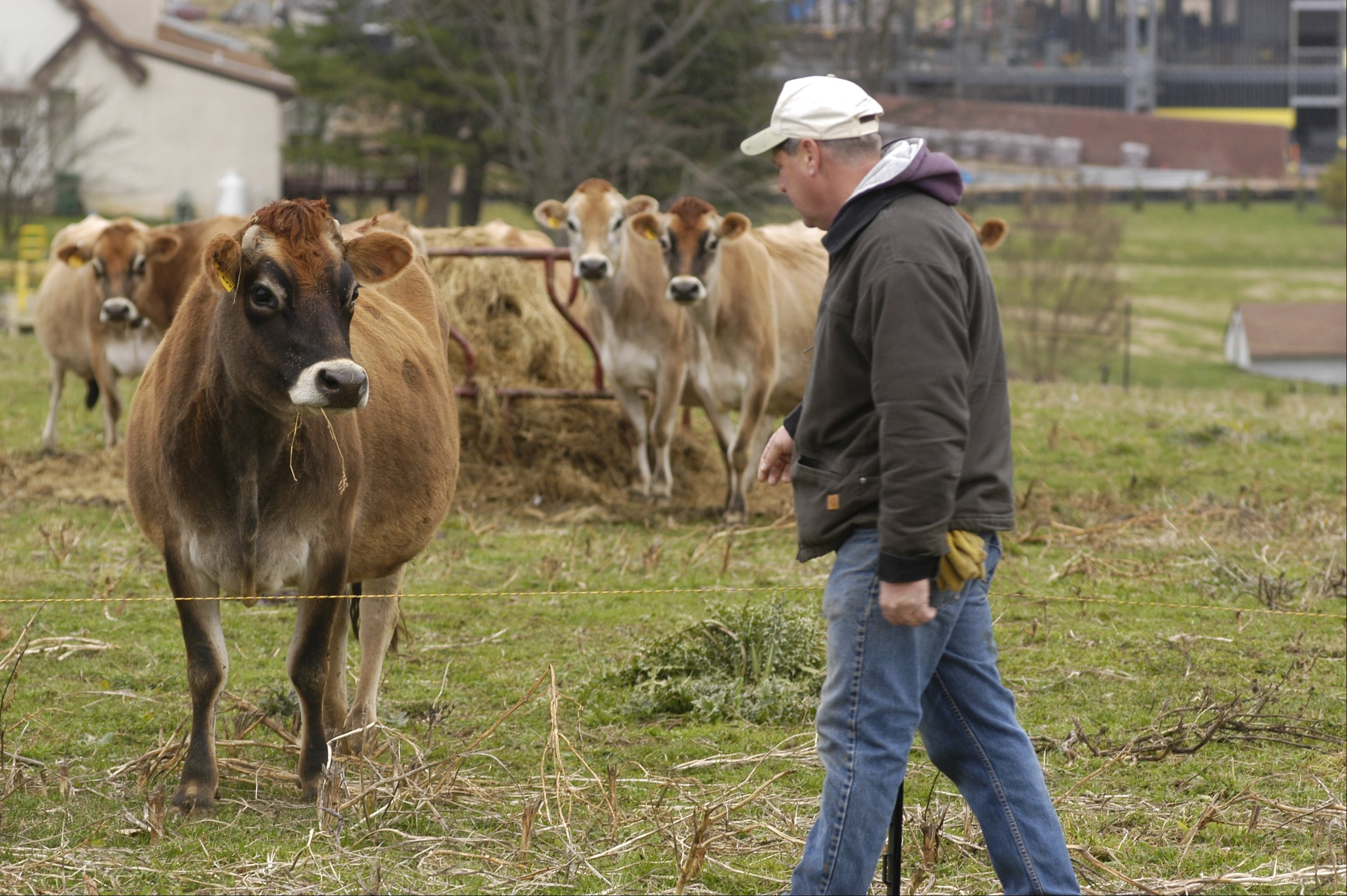 Photo Credit Edwin Remsberg. Picture of farmer and cattle.