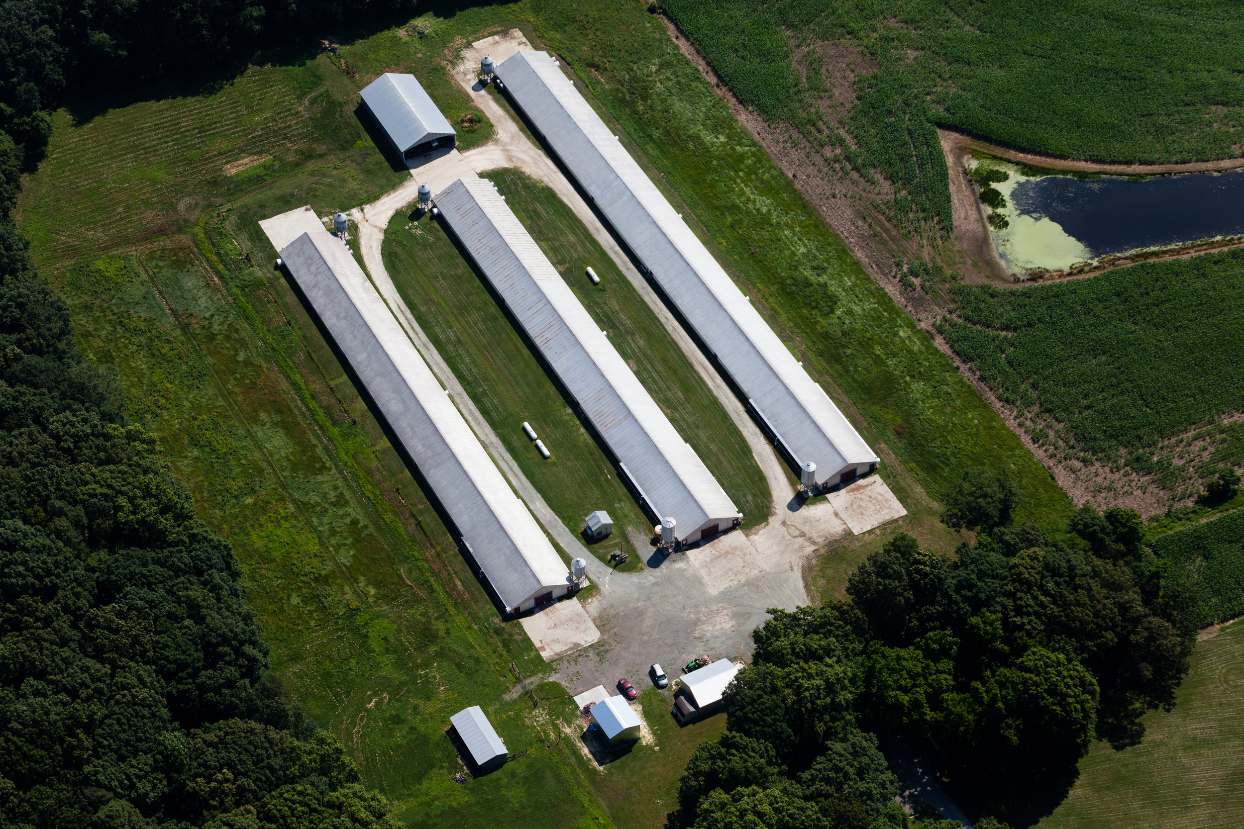 Aerial view of Queen Anne's County poultry farm. Image is by Will Parson/Chesapeake Bay Program with aerial support by LightHawk.