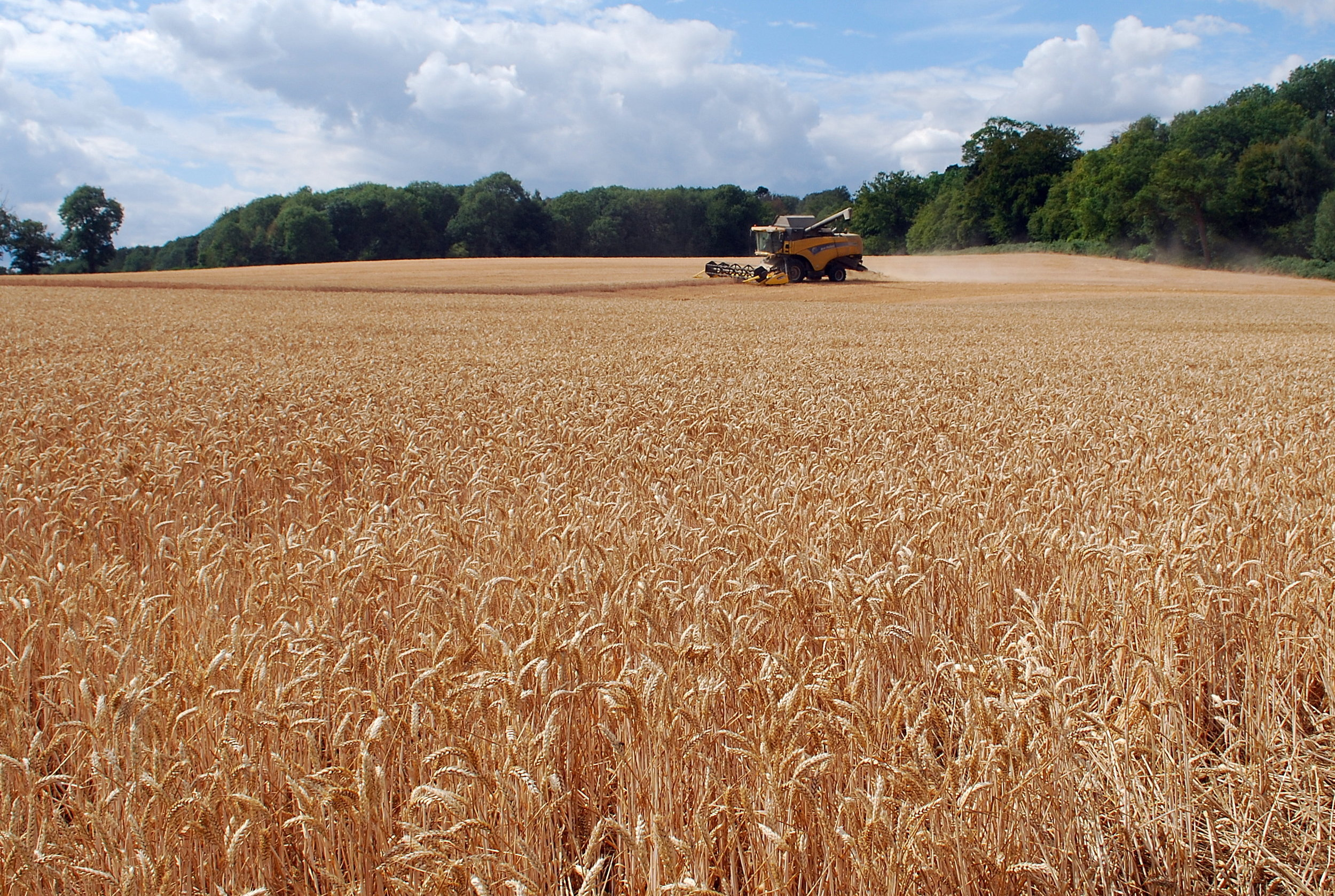 Combine harvesting wheat. Image by Lynda Bullock.