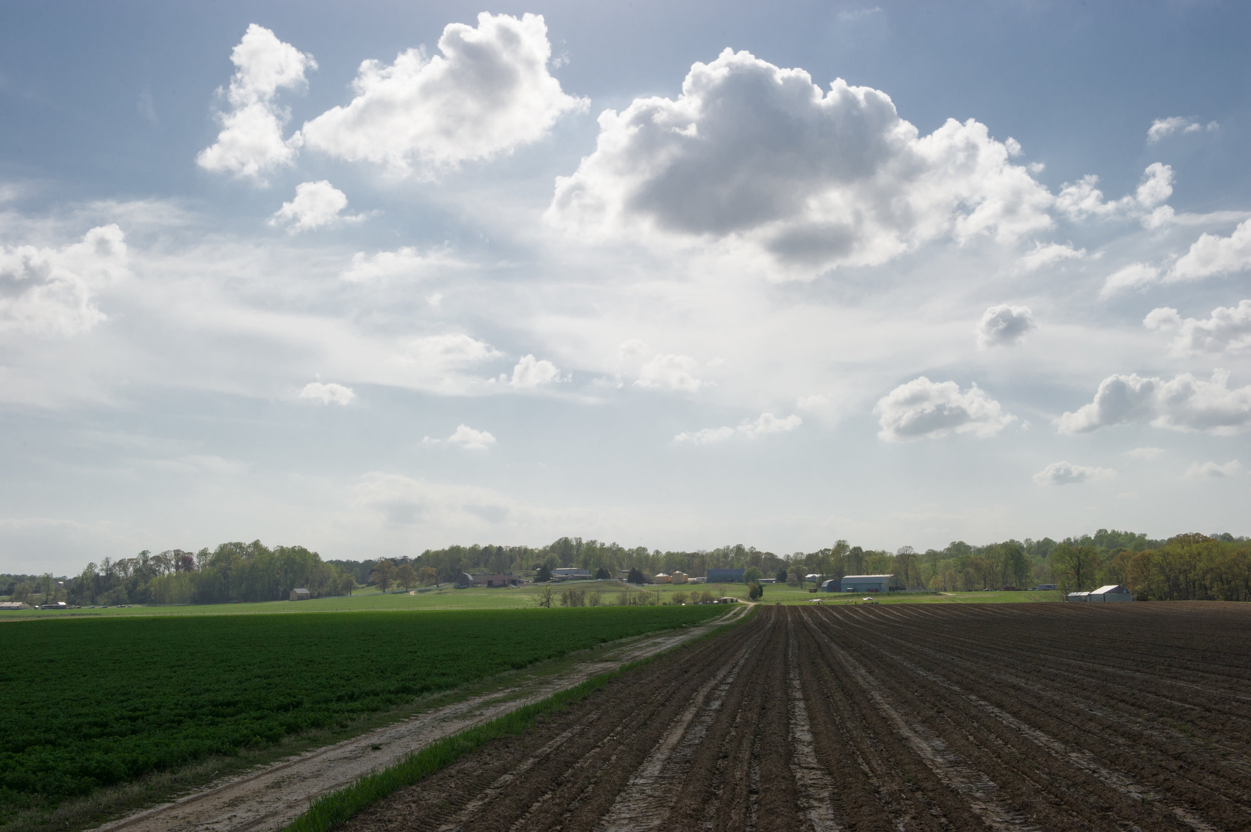 Image of a farm field in Southern Maryland. Photo Credit Edwin Remsberg.