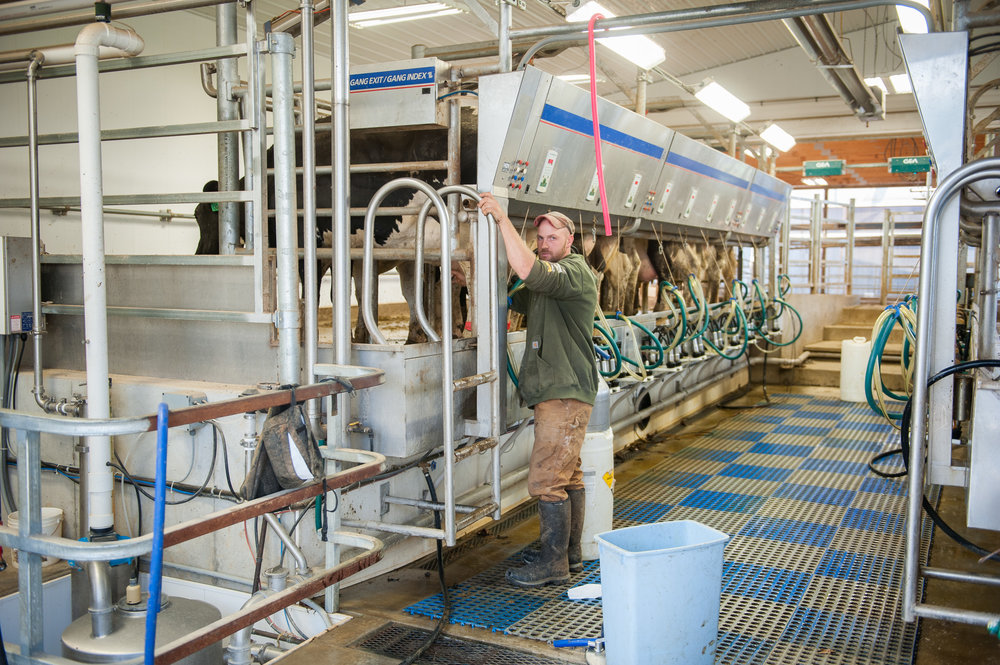 Robotic milkers at Maryland dairy farm. Image by Edwin Remsberg.