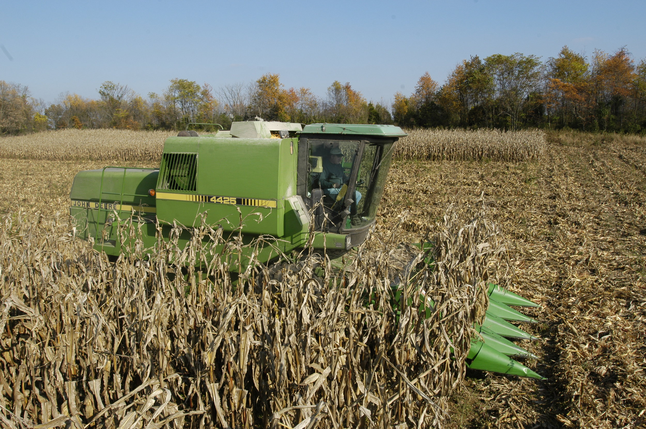 Maryland corn harvest with combine with corn header. Image by Edwin Remsberg