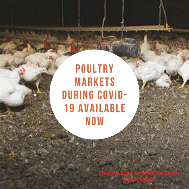 Curious about what is going on in poultry markets during #COVID19.  I recently had Dr. Jordan Shockley on the podcast to discuss just that issue.  Check out the episode by clicking on the link in my bio.  #AgChat #Poultry