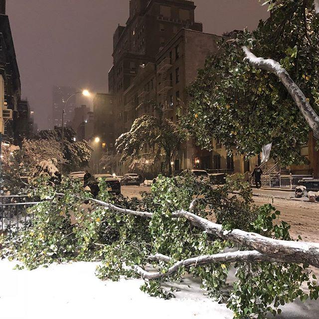 #nyc #snow #tree #timber