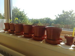 Indoor-herb-garden.jpg