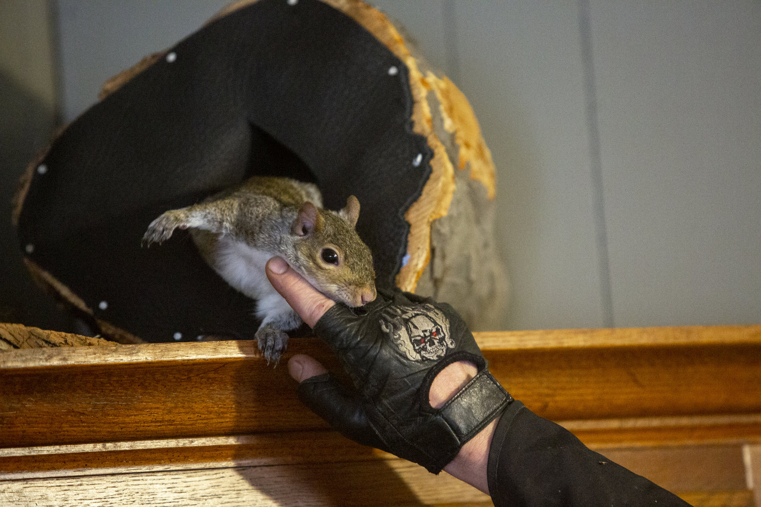 Tiny the squirrel emerges from his indoor, manmade nest to receive affection from his owner. Residents of Sharpsburg site the freedom to do as they please, without the judgement of neighbors, as one of the perks of living in this rural area.