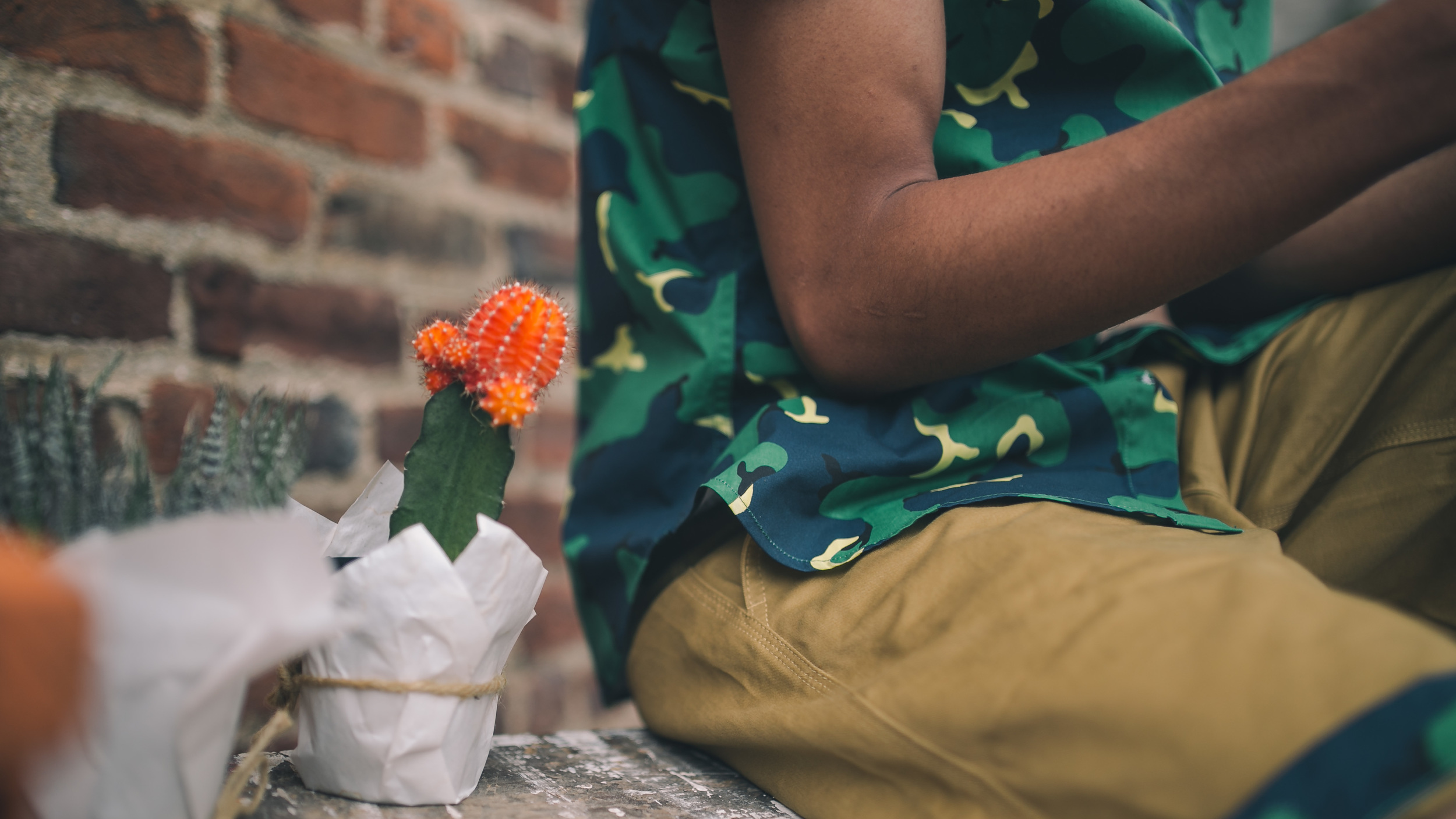 cactus short.jpg