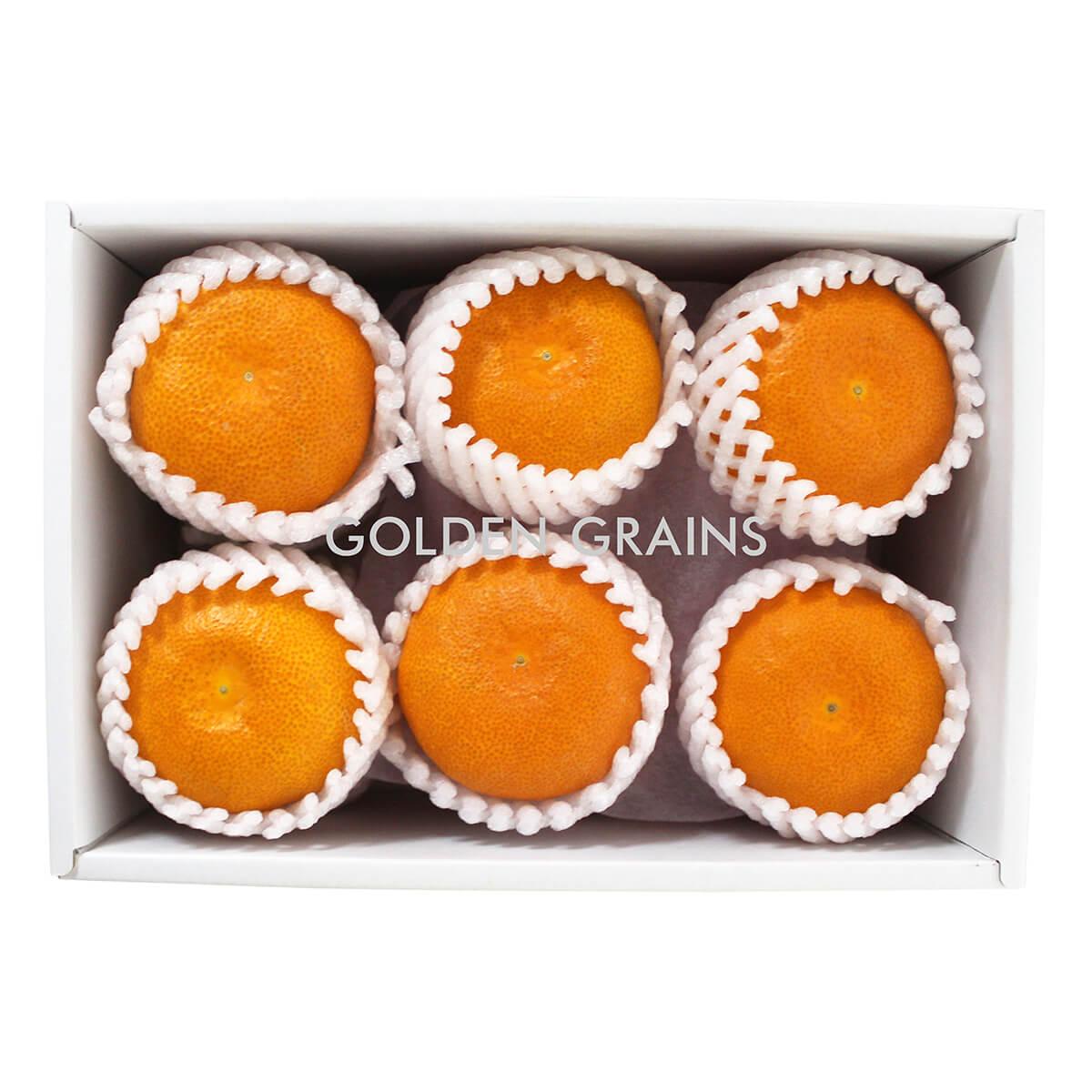 Golden Grains Dubai Export - Japan Fresh Fruits - Orange.jpg