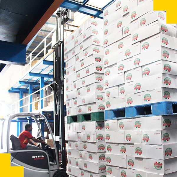 Golden Grains Export - Italy Stock.jpg
