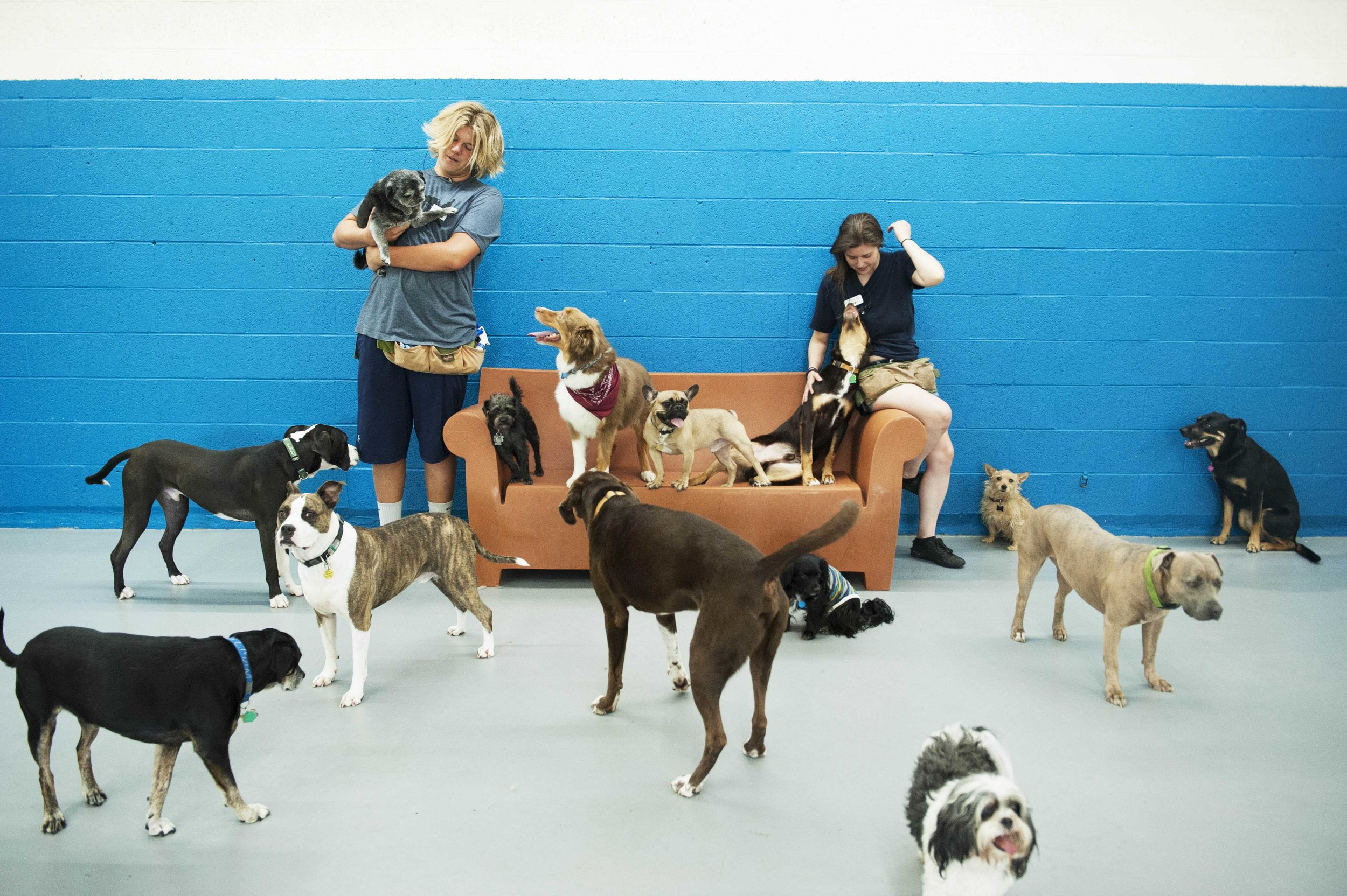 dog daycare cage free grateful dog midtown sac.jpg