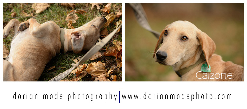xCompanion-Pet-Rescue-Adopt-Dont-Shop_0002.jpg