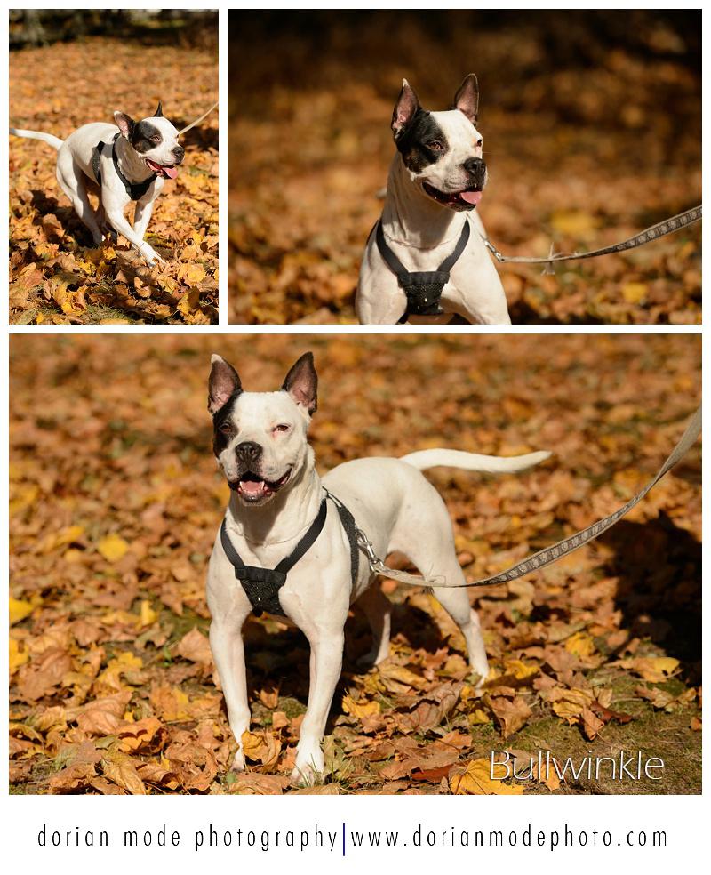 xCompanion-Pet-Rescue-Adopt-Dont-Shop_0001.jpg