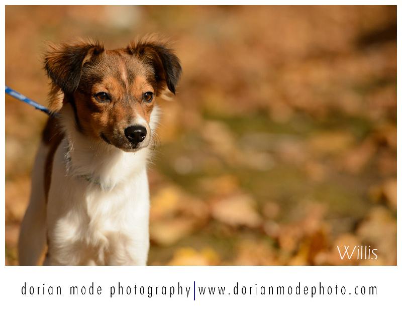 xCompanion-Pet-Rescue-Adopt-Dont-Shop_0016.jpg