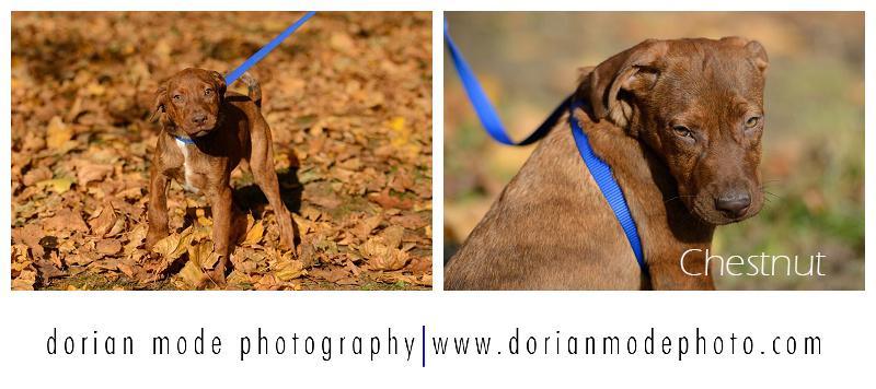 xCompanion-Pet-Rescue-Adopt-Dont-Shop_0003.jpg