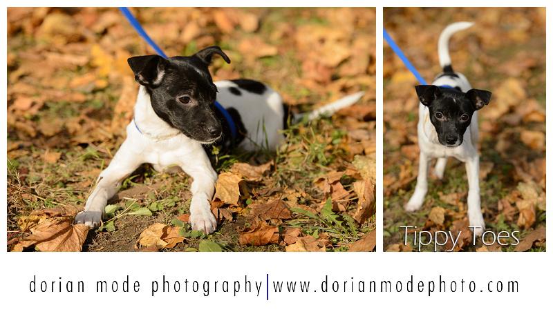 Companion-Pet-Rescue-Adopt-Dont-Shop_0015.jpg