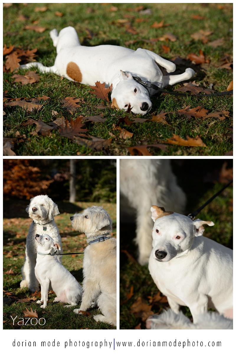 Companion-Pet-Rescue-Adopt-Dont-Shop_0018