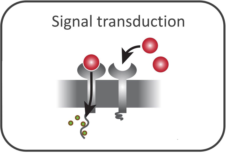 signal_rectangle.jpg
